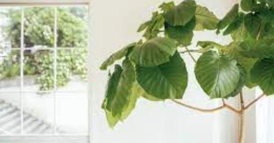 幸運風水アイテム「観葉植物を取り入れる」